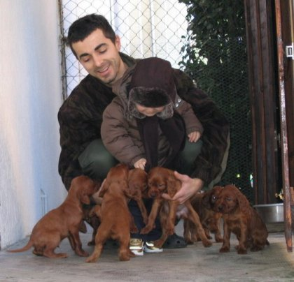 Prossimo evento cuccioli setter... 4